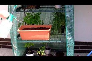 Radieschen pflanzen - so gelingt's