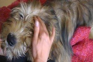 Hund massieren - so wird es eine Wohltat für Ihr Tier