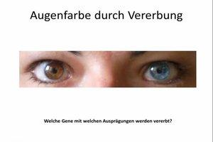 Augenfarbe durch Vererbung einfach erklärt