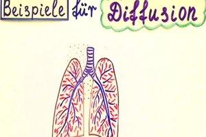 Diffusion in der Biologie - Definition und Beispiele