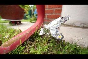 Marder im Garten - so vertreiben Sie den ungewollten Gast