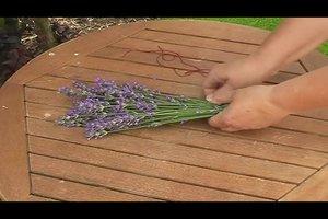 Lavendel trocknen für Lavendelsäckchen - so gelingt's