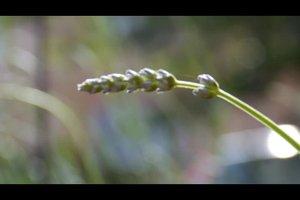 Welche Kräuter soll man zusammen pflanzen? - Nützliche Hinweise