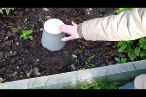 Rote Ameisen im Garten - was tun?