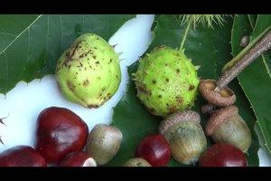 Herbstliche Tischdekoration - so dekorieren Sie mit Laub und Obst