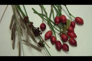 Bastelideen für den Herbst mit Hagebutten
