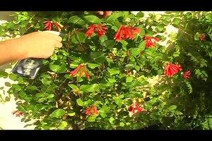 Essig gegen Läuse? - Diese Hausmittel helfen bei Blattläusen