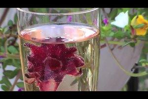 Hibiskusblüten im Sekt - Rezept