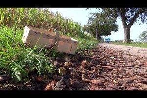 Kastanien sammeln - wann und wie es erfolgreich gelingt