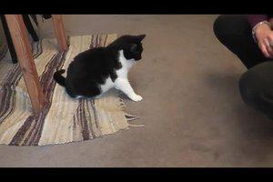 Katzen das Schreien abgewöhnen - so können Sie vorgehen