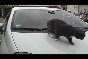 Katzenabwehr -  beim Auto geht es so
