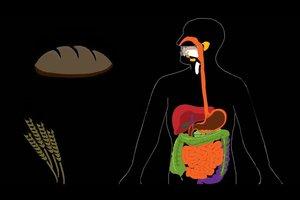 Ernährung bei Gallensteinen - so ernähren Sie sich richtig