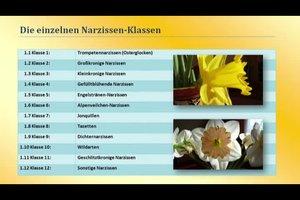 Osterglocke oder Narzisse - den Unterschied erkennen Sie so