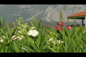 Oleander zurückschneiden - so machen Sie's richtig