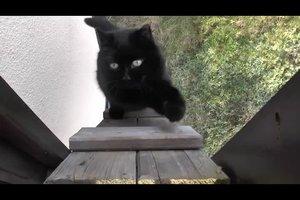 Katzentreppe - eine Bauanleitung