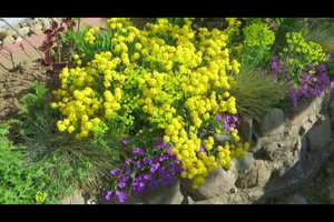 Bodendecker am Hang pflanzen - nützliche Hinweise