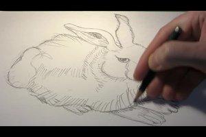 Hasen - das Zeichnen leicht gemacht