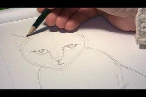Katzen zeichnen lernen - so geht´s