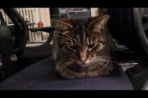 Katzen - Verhalten richtig deuten