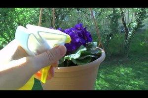Blattläuse mit Milch entfernen - so geht's