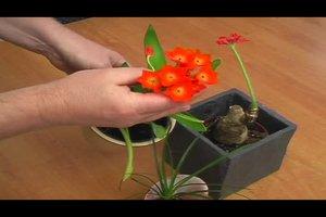 Zimmerpflanzen bestimmen - so geht's