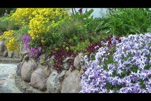 Steinpflanzen richtig einpflanzen - Anleitung