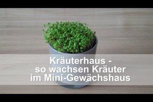 Kräuterhaus - so wachsen Kräuter im Mini-Gewächshaus