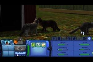 Sims 3 - Katzen züchten Sie so