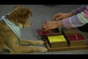 Weihnachtsgeschenk für Hunde - einige Ideen