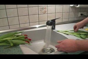 Tulpen anschneiden - so machen Sie es richtig