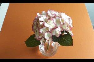 Hortensien trocknen - so geht´s richtig