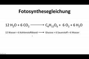 Fotosynthesegleichung - so gelingt die chemische Rechnung