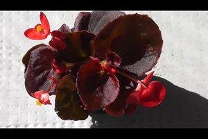 Pflegeleichte Balkonpflanzen - so schaffen Sie eine Oase ohne viel Aufwand