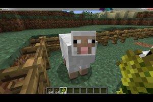 Minecraft: Schafe halten - so geht´s