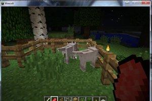 In Minecraft Hunde züchten - so geht´s