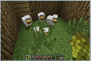 Minecraft: Hühner füttern - so geht's