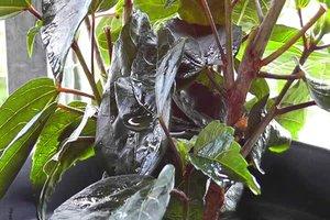 Blattläuse mit Essigwasser bekämpfen - so geht's