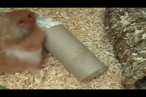 Hamsterspielzeuge selber basteln