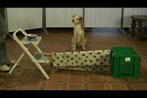 Hundespiele im Haus - so beschäftigen Sie Ihren Hund sinnvoll