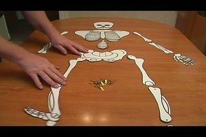 Skelett basteln - Bastelanleitung