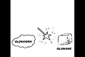 Blutzuckerregulation - einfach erklärt