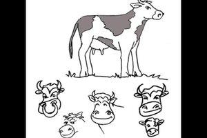 Den Unterschied von Kuh und Rind leicht erklärt