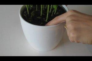 Vertrocknete Pflanzen retten - Tipps zur Soforthilfe