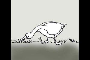 Ente oder Gans? - Unterschied leicht erklärt