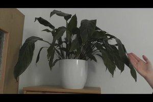 Pflanzen die wenig Licht brauchen - dieser Platz ist geeignet