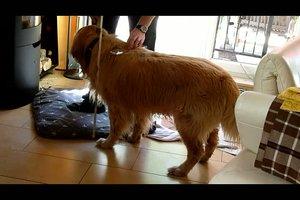 Widerristhöhe beim Hund - so wird sie richtig gemessen