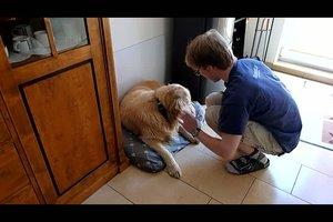 Wie gewöhne ich meinem Hund das Bellen ab, wenn es an der Haustür klingelt?
