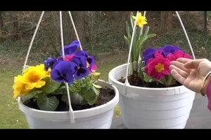 Blumen im März pflanzen – das müssen Sie beachten