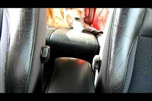 Ledersitze reinigen - so wird das Leder im Auto sauber