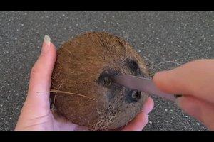 Kokosnuss öffnen - so geht's ohne Hammer
